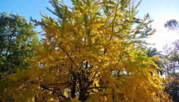 20 novembre classi IC e IF alla festa dell'albero