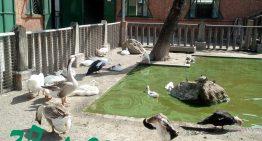 27 Aprile visita alla fattoria Albatros