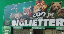 Visita allo zoo di Napoli